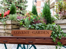 Thing to do near Covent Garden